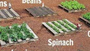 Wooden Pallet Vegetable Gardening | 25+ neat garden projects with wood pallets ...